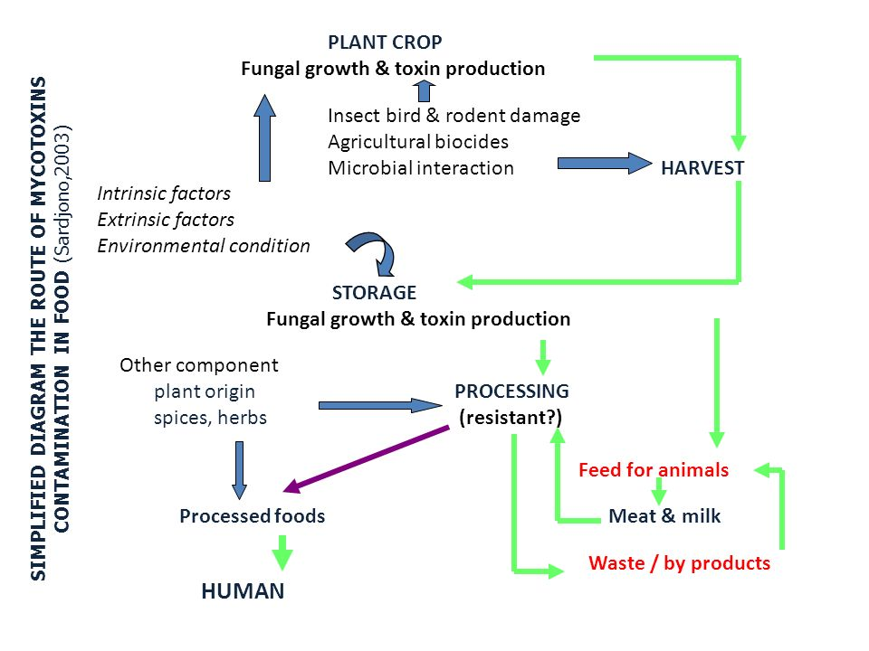 PLANT CROP Fungal growth & toxin production Insect bird & rodent damage Agricultural biocides Microbial interaction HARVEST Intrinsic factors Extrinsi