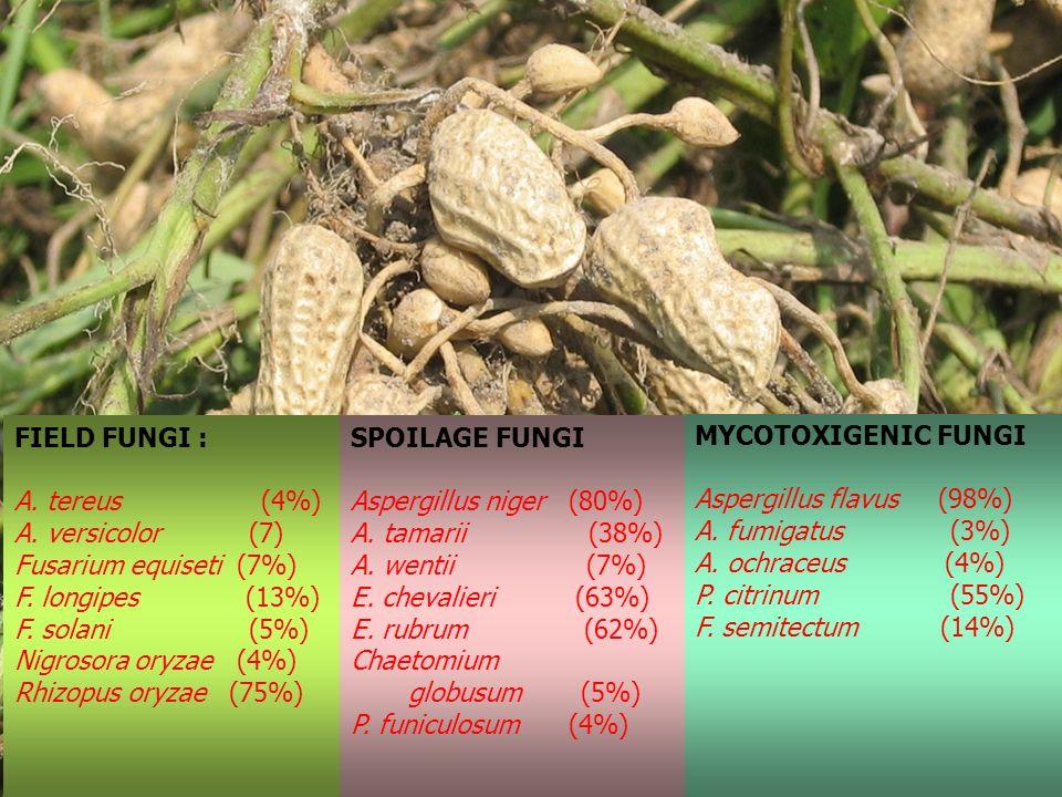 FIELD FUNGI : A. tereus (4%) A. versicolor (7) Fusarium equiseti (7%) F. longipes (13%) F. solani (5%) Nigrosora oryzae (4%) Rhizopus oryzae (75%) SPO