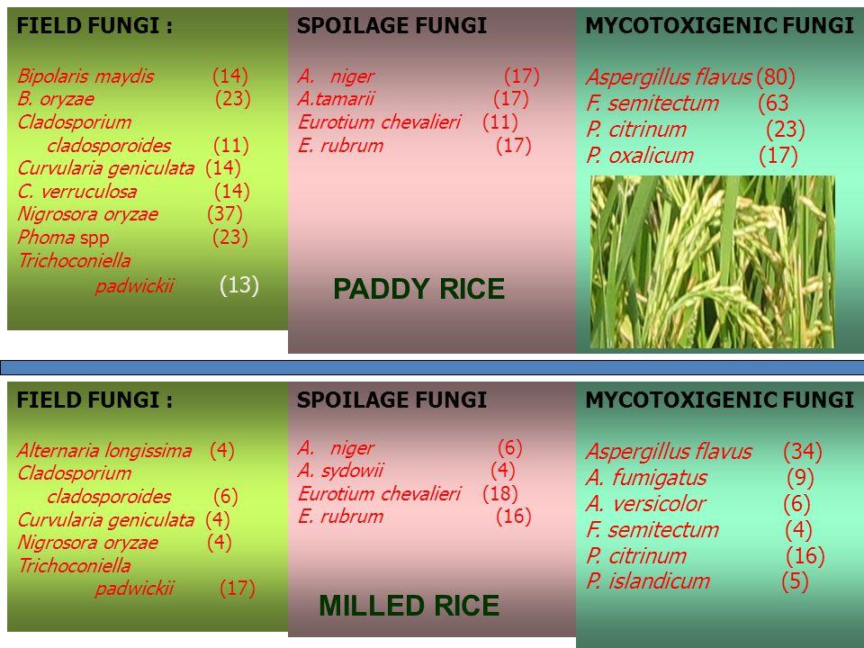 FIELD FUNGI : Bipolaris maydis (14) B. oryzae (23) Cladosporium cladosporoides (11) Curvularia geniculata (14) C. verruculosa (14) Nigrosora oryzae (3