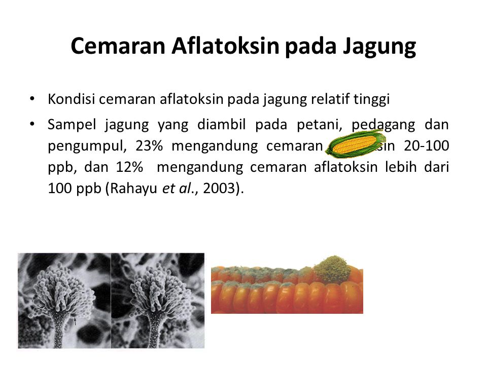Cemaran Aflatoksin pada Jagung Kondisi cemaran aflatoksin pada jagung relatif tinggi Sampel jagung yang diambil pada petani, pedagang dan pengumpul, 2