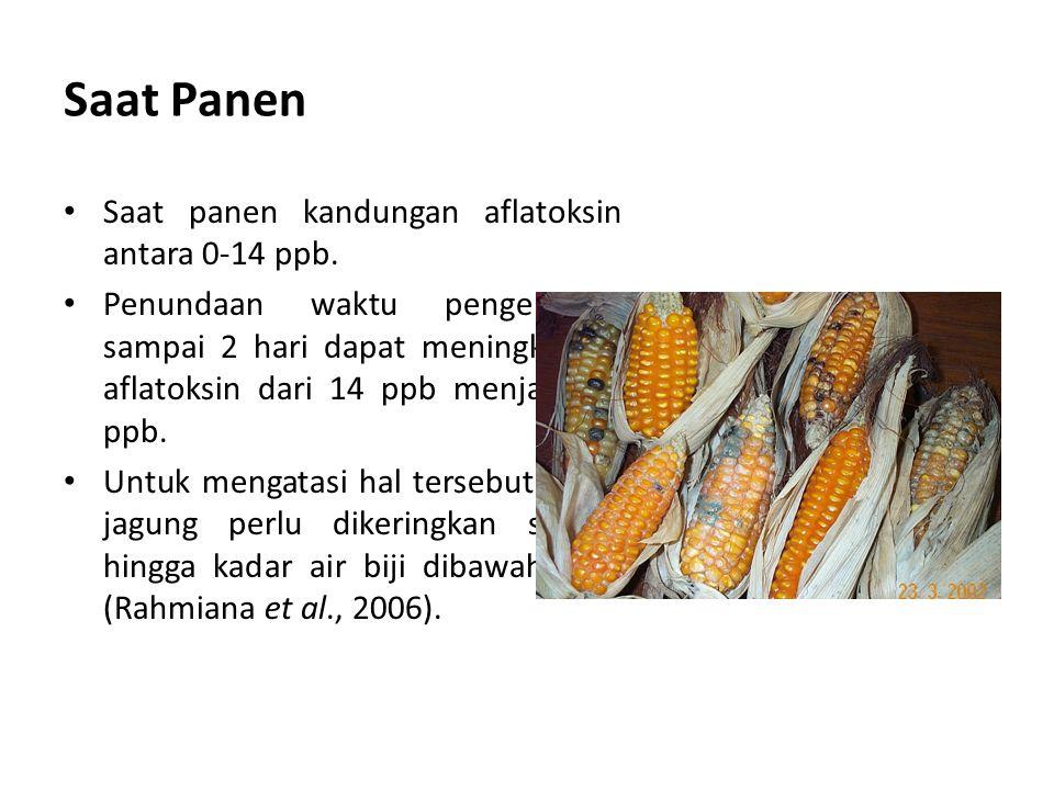 Saat Panen Saat panen kandungan aflatoksin antara 0-14 ppb. Penundaan waktu pengeringan sampai 2 hari dapat meningkatkan aflatoksin dari 14 ppb menjad