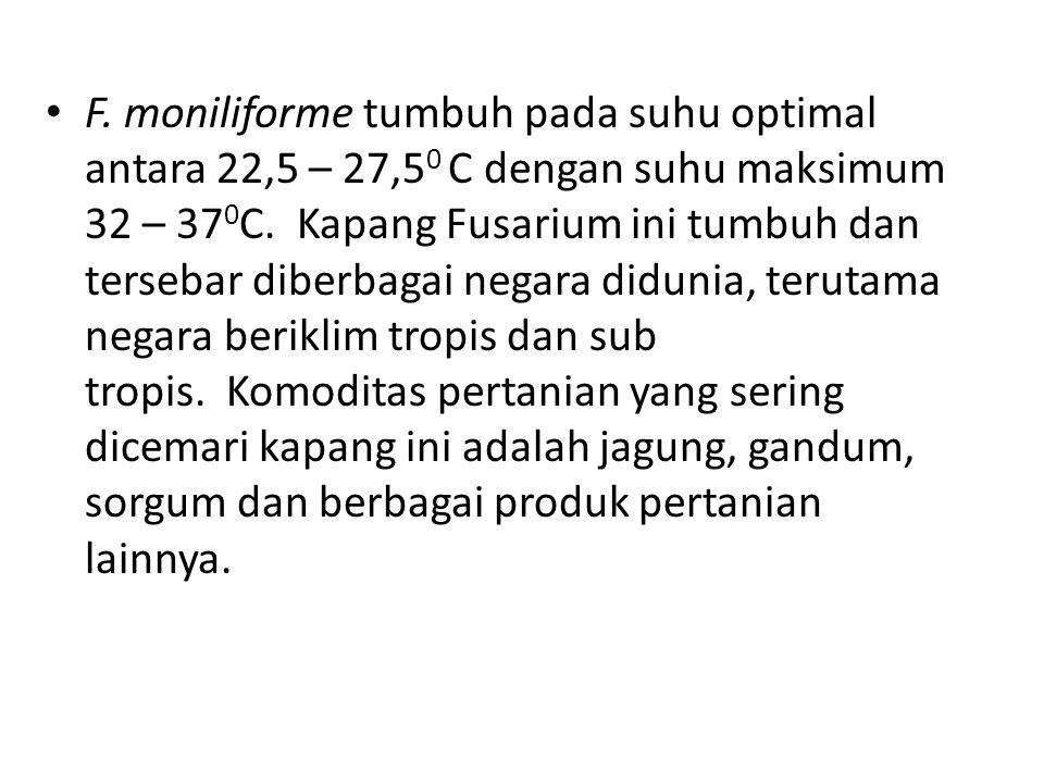 F. moniliforme tumbuh pada suhu optimal antara 22,5 – 27,5 0 C dengan suhu maksimum 32 – 37 0 C. Kapang Fusarium ini tumbuh dan tersebar diberbagai ne