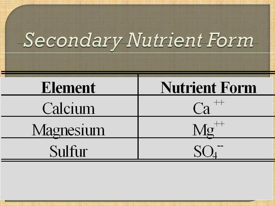 Calcium & Magnesium Cycle From Havlin et al., 2005