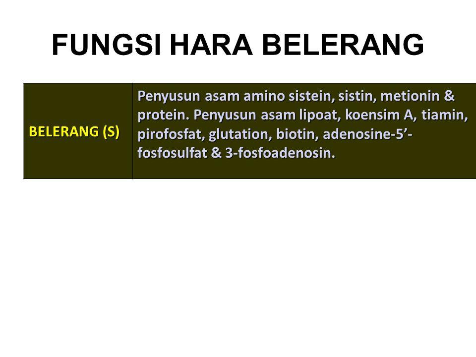 FUNGSI HARA BELERANG BELERANG (S) Penyusun asam amino sistein, sistin, metionin & protein. Penyusun asam lipoat, koensim A, tiamin, pirofosfat, glutat