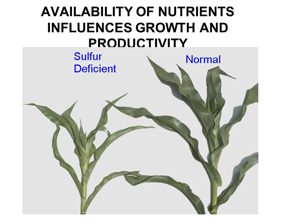 AVAILABILITY OF NUTRIENTS INFLUENCES GROWTH AND PRODUCTIVITY