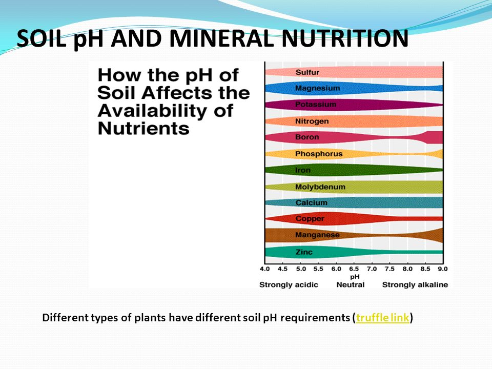 SOIL pH AND MINERAL NUTRITION Different types of plants have different soil pH requirements (truffle link)truffle link