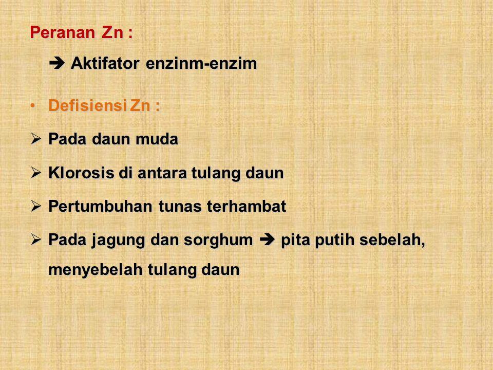 Peranan Zn : Aktifator enzinm-enzim Defisiensi Zn :Defisiensi Zn : Pada daun muda Pada daun muda Klorosis di antara tulang daun Klorosis di antara tul