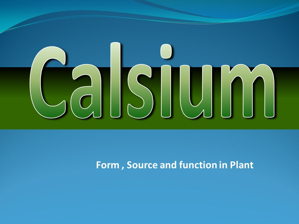 Form, Source and function in Plant