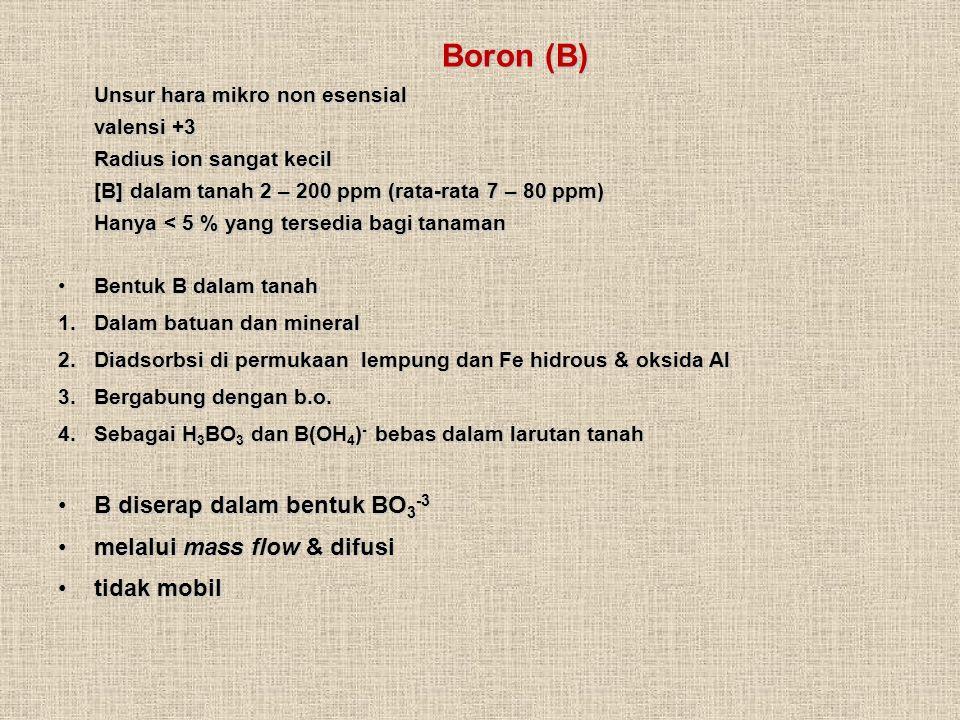Boron (B) Unsur hara mikro non esensial valensi +3 Radius ion sangat kecil [B] dalam tanah 2 – 200 ppm (rata-rata 7 – 80 ppm) Hanya < 5 % yang tersedia bagi tanaman Boron (B) Unsur hara mikro non esensial valensi +3 Radius ion sangat kecil [B] dalam tanah 2 – 200 ppm (rata-rata 7 – 80 ppm) Hanya < 5 % yang tersedia bagi tanaman Bentuk B dalam tanahBentuk B dalam tanah 1.Dalam batuan dan mineral 2.Diadsorbsi di permukaan lempung dan Fe hidrous & oksida Al 3.Bergabung dengan b.o.