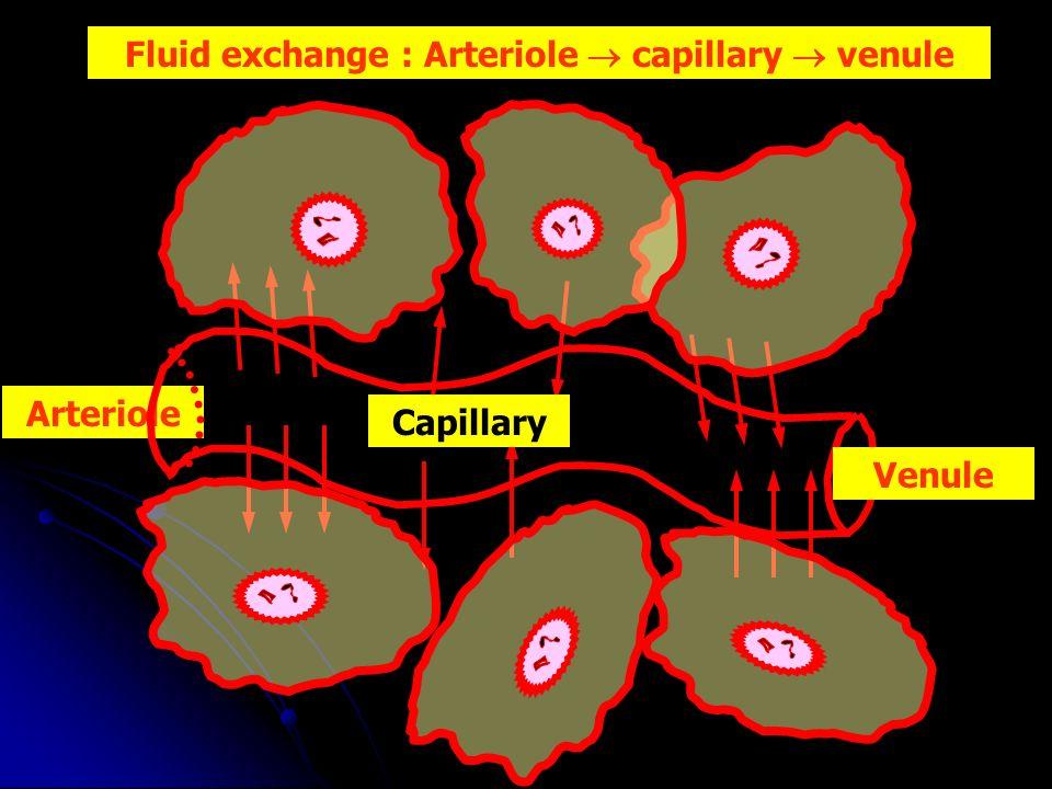 Arteriole Venule Capillary Fluid exchange : Arteriole capillary venule