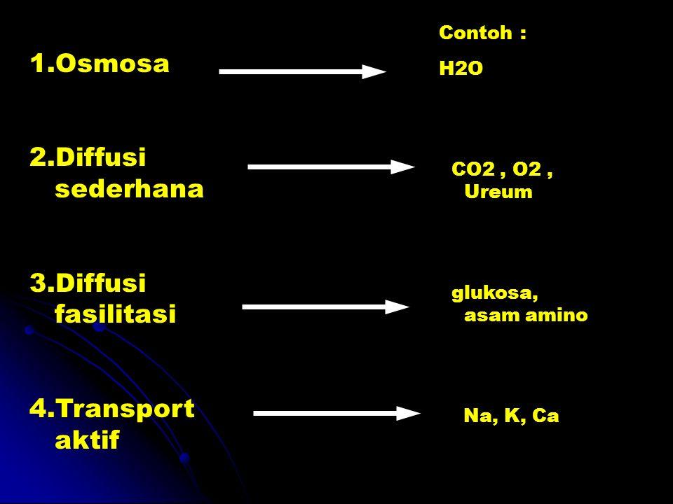 1.Osmosa 2.Diffusi sederhana 3.Diffusi fasilitasi 4.Transport aktif Contoh : H2O CO2, O2, Ureum glukosa, asam amino Na, K, Ca