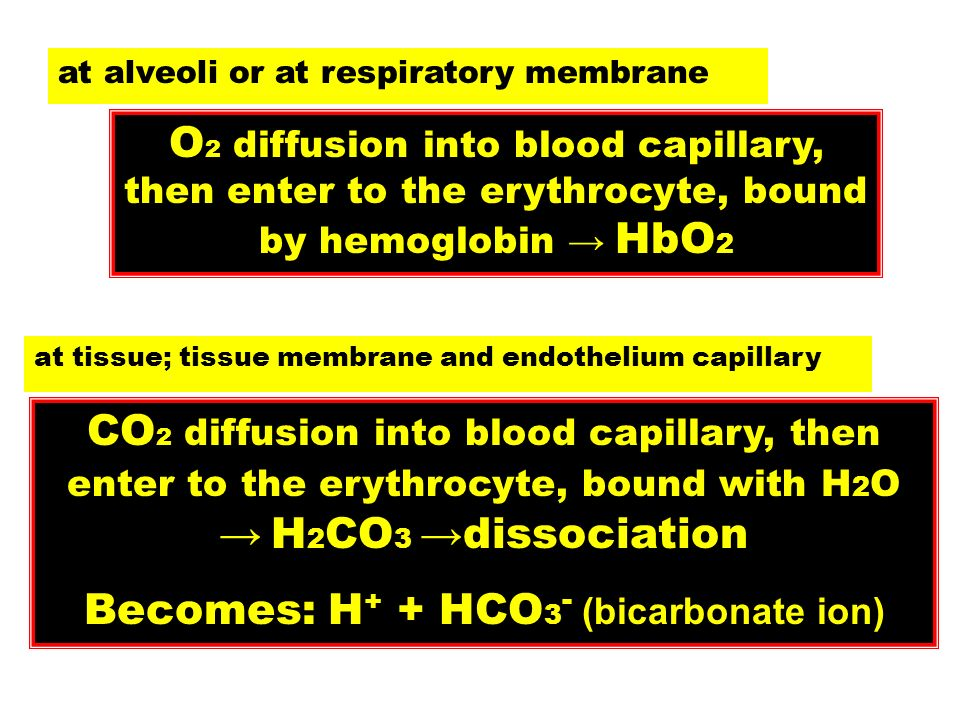 O 2 diffusion into blood capillary, then enter to the erythrocyte, bound by hemoglobin HbO 2 CO 2 diffusion into blood capillary, then enter to the er