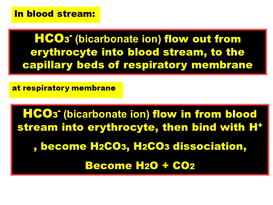 HCO 3 - (bicarbonate ion) flow out from erythrocyte into blood stream, to the capillary beds of respiratory membrane In blood stream: at respiratory m