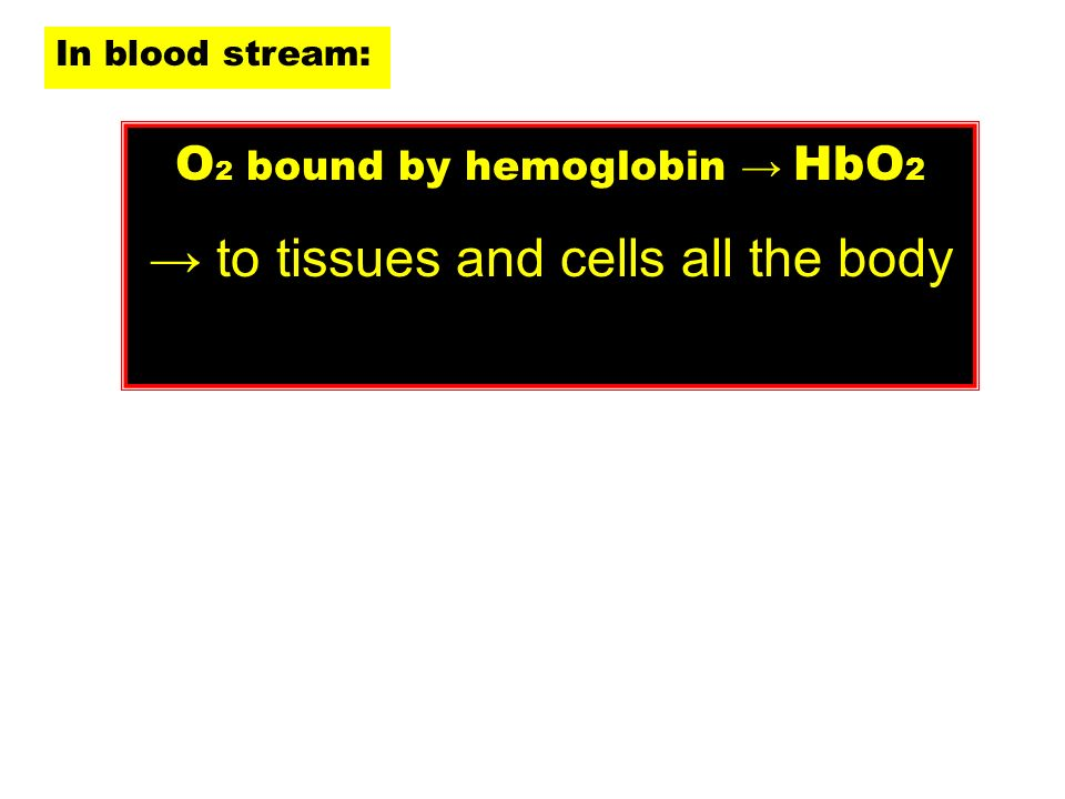 In blood stream: O 2 bound by hemoglobin HbO 2 to tissues and cells all the body