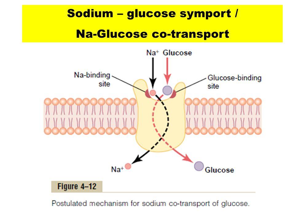 Sodium – glucose symport / Na-Glucose co-transport
