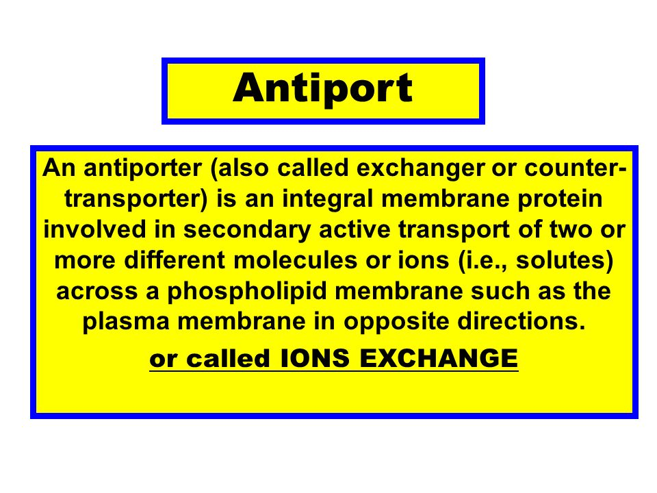 Antiport An antiporter (also called exchanger or counter- transporter) is an integral membrane protein involved in secondary active transport of two o