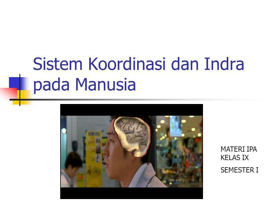 Sistem Koordinasi dan Indra pada Manusia MATERI IPA KELAS IX SEMESTER I