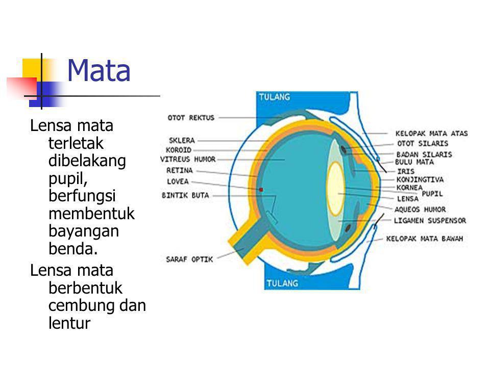 Mata Lensa mata terletak dibelakang pupil, berfungsi membentuk bayangan benda. Lensa mata berbentuk cembung dan lentur