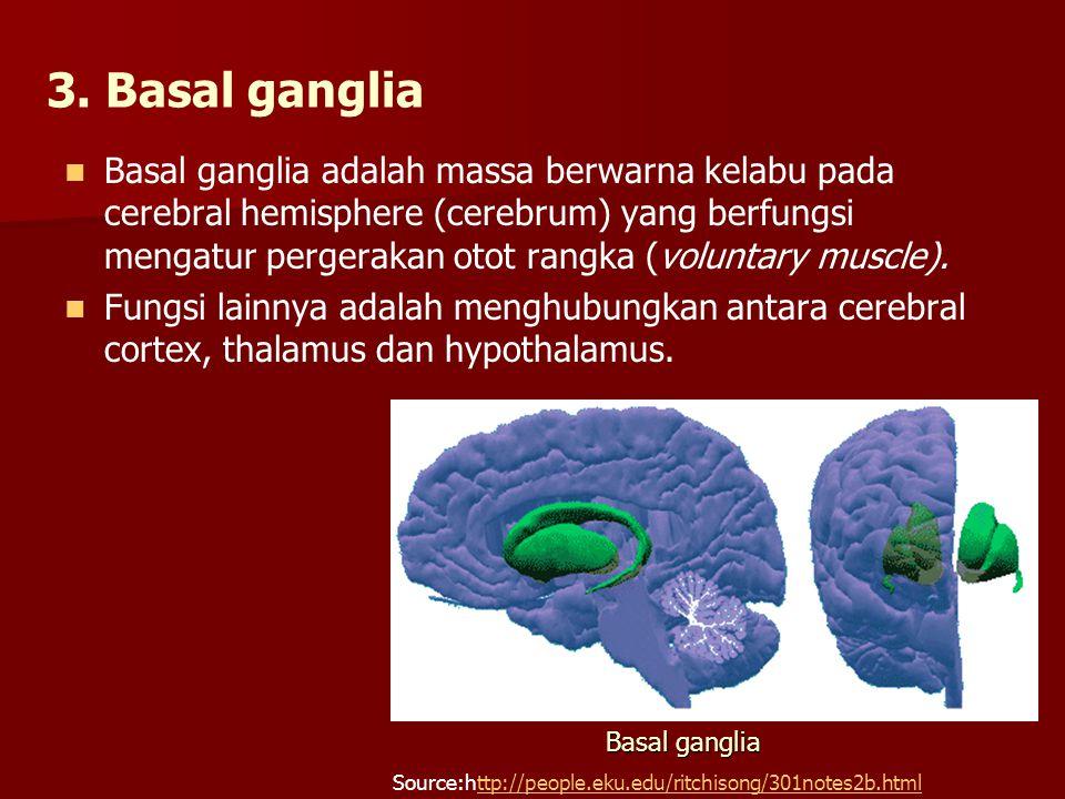 3. Basal ganglia Basal ganglia adalah massa berwarna kelabu pada cerebral hemisphere (cerebrum) yang berfungsi mengatur pergerakan otot rangka (volunt