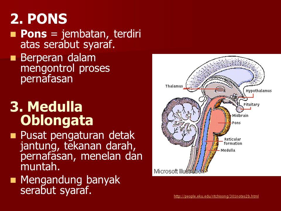 2. PONS Pons = jembatan, terdiri atas serabut syaraf. Berperan dalam mengontrol proses pernafasan 3. Medulla Oblongata Pusat pengaturan detak jantung,