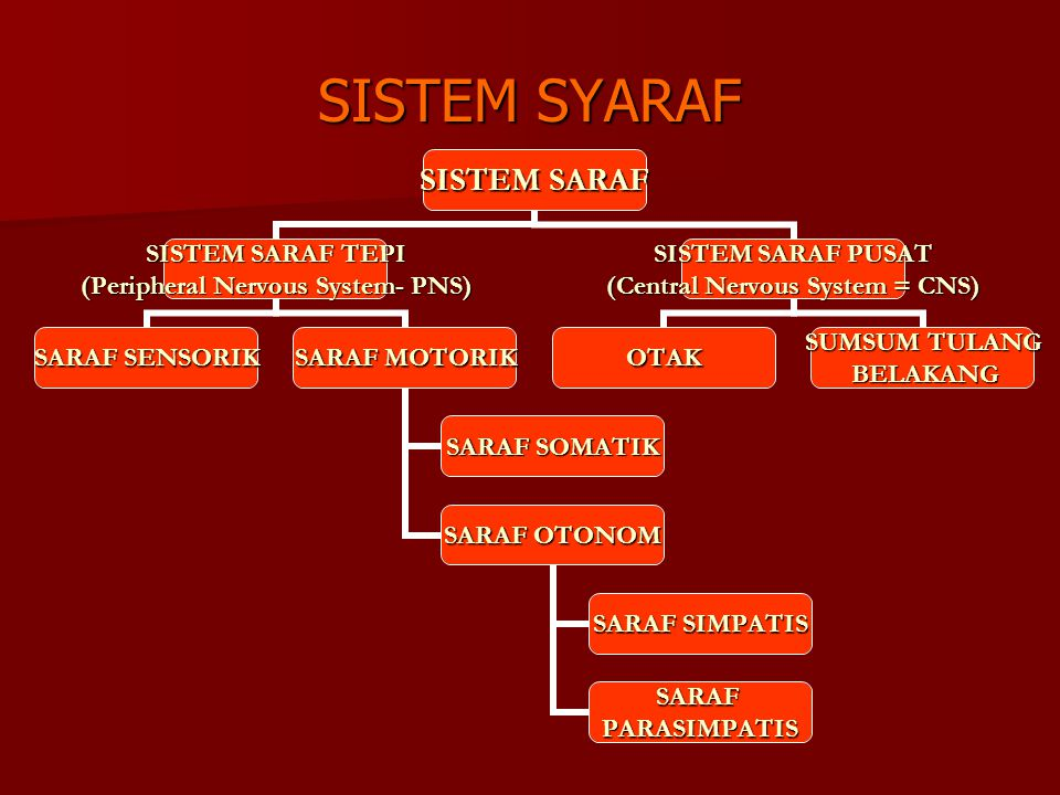 SISTEM SYARAF SISTEM SARAF SISTEM SARAF TEPI (Peripheral Nervous System- PNS) SARAF SENSORIK SARAF MOTORIK SARAF SOMATIK SARAF OTONOM SARAF SIMPATIS S