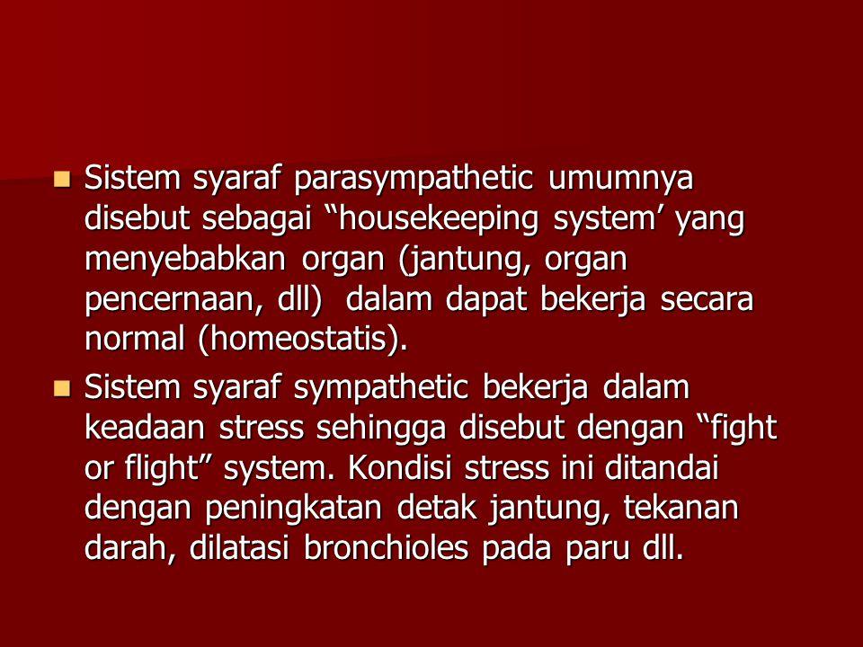 """Sistem syaraf parasympathetic umumnya disebut sebagai """"housekeeping system' yang menyebabkan organ (jantung, organ pencernaan, dll) dalam dapat bekerj"""