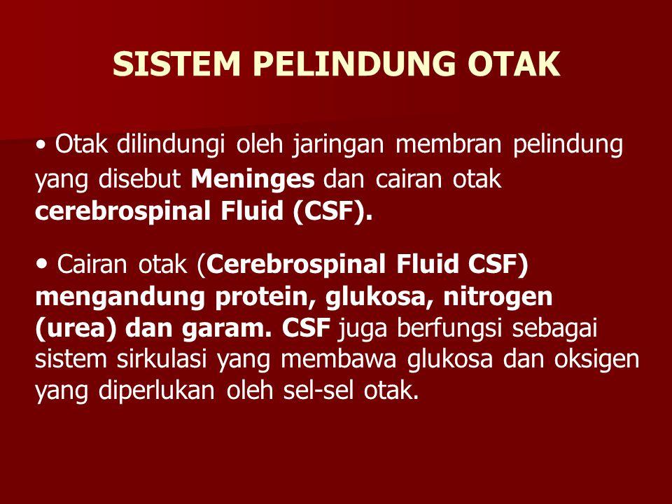Otak dilindungi oleh jaringan membran pelindung yang disebut Meninges dan cairan otak cerebrospinal Fluid (CSF). Cairan otak (Cerebrospinal Fluid CSF)