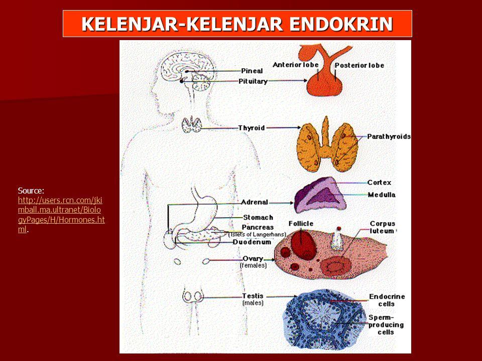 KELENJAR-KELENJAR ENDOKRIN Source: http://users.rcn.com/jki mball.ma.ultranet/Biolo gyPages/H/Hormones.ht ml. http://users.rcn.com/jki mball.ma.ultran