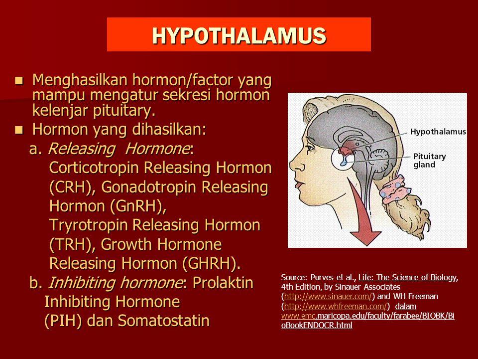 HYPOTHALAMUS Menghasilkan hormon/factor yang mampu mengatur sekresi hormon kelenjar pituitary. Menghasilkan hormon/factor yang mampu mengatur sekresi