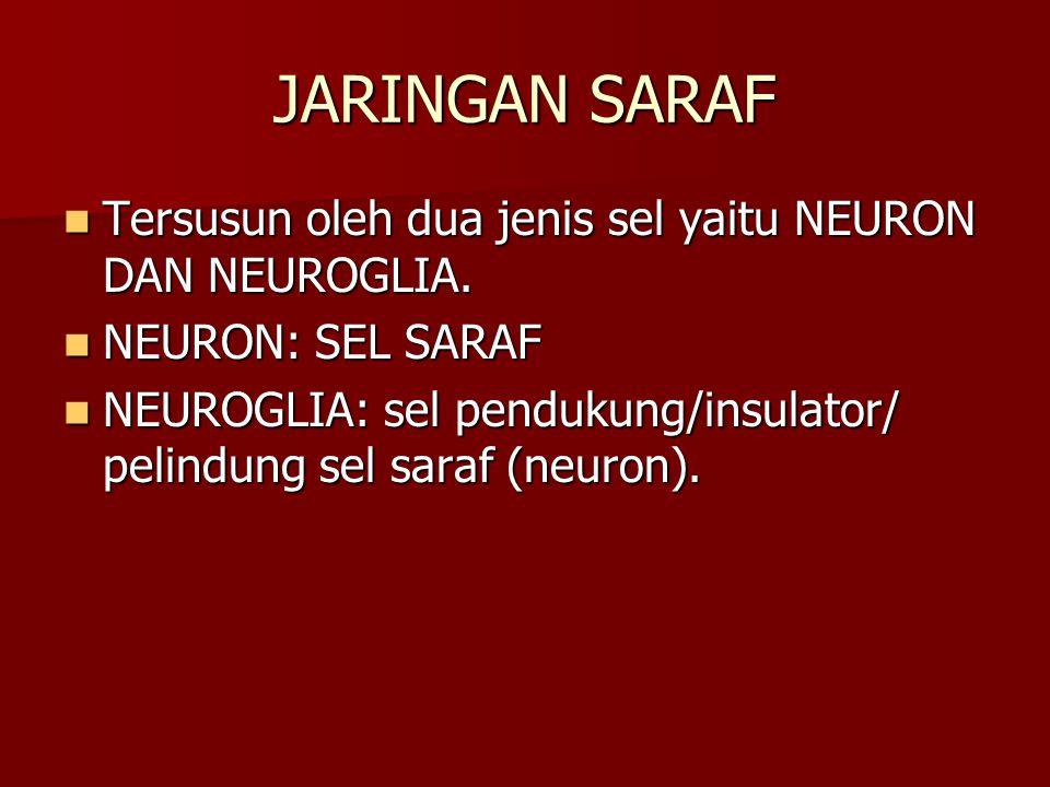 JARINGAN SARAF Tersusun oleh dua jenis sel yaitu NEURON DAN NEUROGLIA. Tersusun oleh dua jenis sel yaitu NEURON DAN NEUROGLIA. NEURON: SEL SARAF NEURO