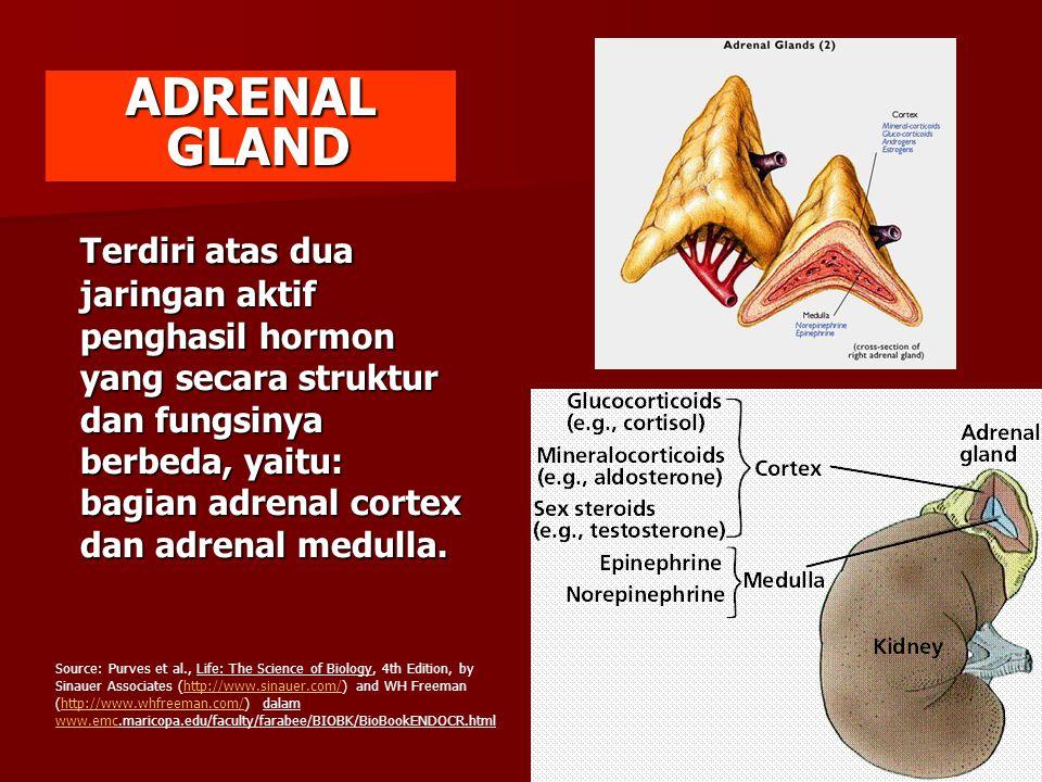 Terdiri atas dua jaringan aktif penghasil hormon yang secara struktur dan fungsinya berbeda, yaitu: bagian adrenal cortex dan adrenal medulla. ADRENAL