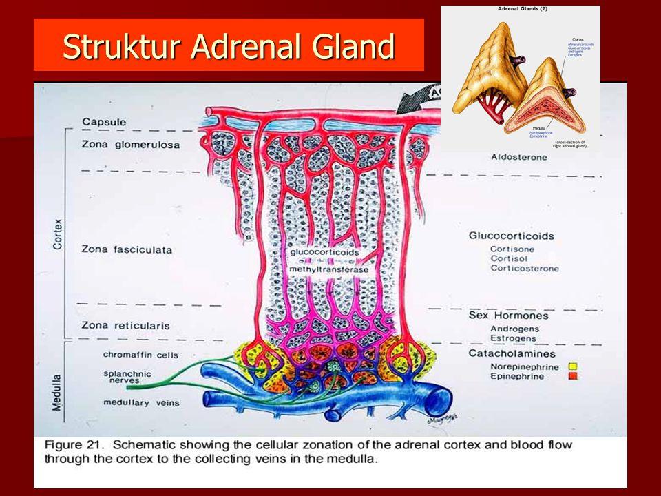Struktur Adrenal Gland