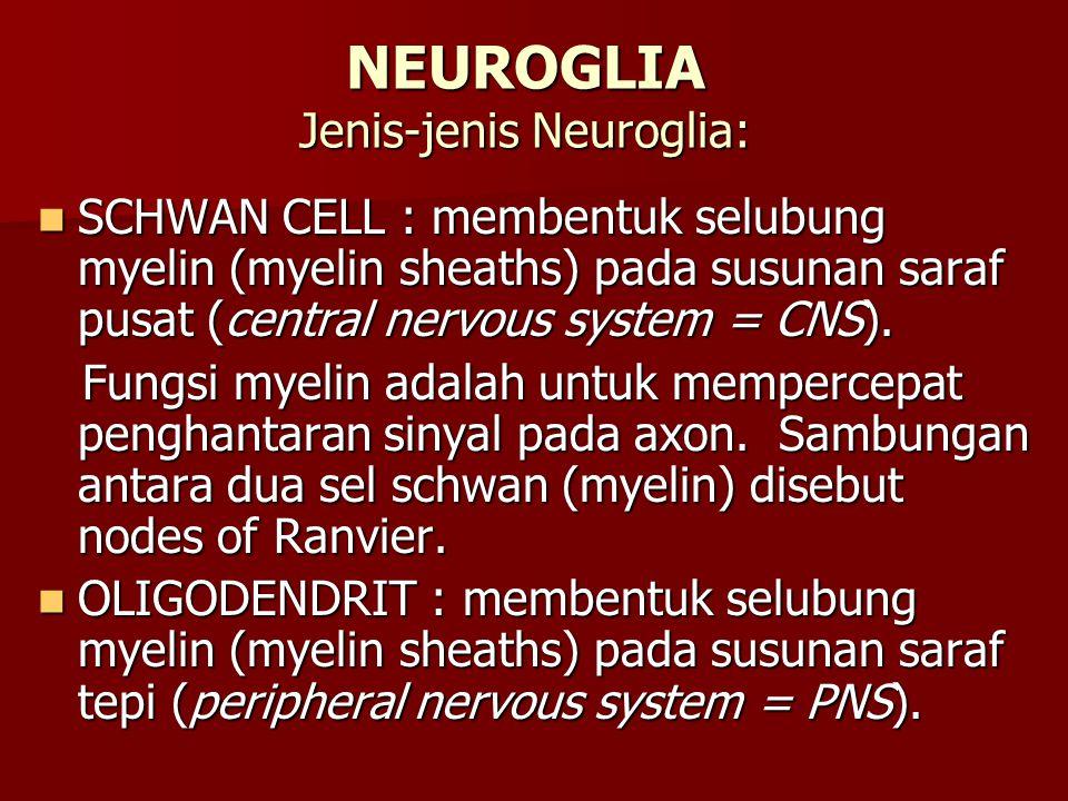 Terdiri atas dua jaringan aktif penghasil hormon yang secara struktur dan fungsinya berbeda, yaitu: bagian adrenal cortex dan adrenal medulla.