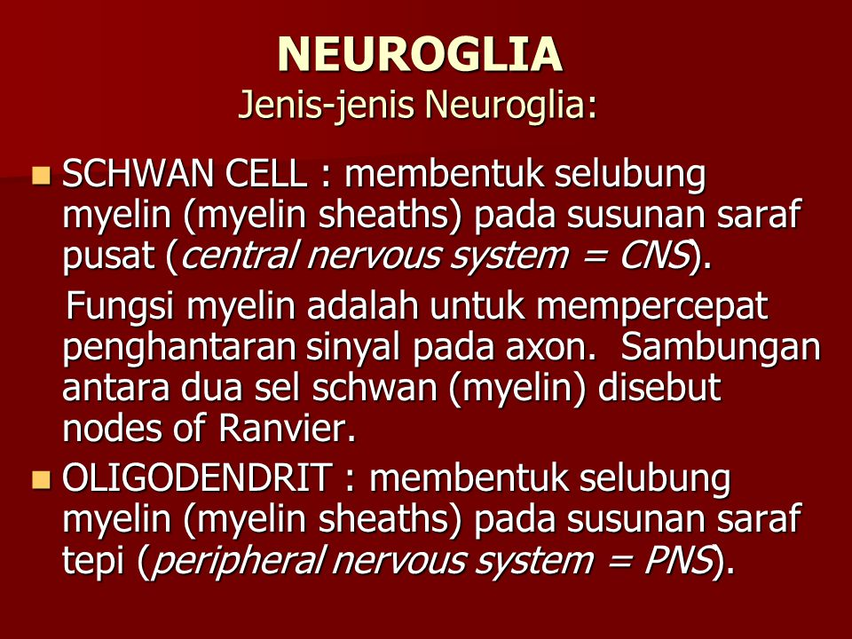 NEUROGLIA Jenis-jenis Neuroglia: SCHWAN CELL : membentuk selubung myelin (myelin sheaths) pada susunan saraf pusat (central nervous system = CNS). SCH