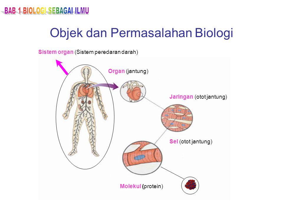 Objek dan Permasalahan Biologi Organ (jantung) Jaringan (otot jantung) Sel (otot jantung) Molekul (protein) Sistem organ (Sistem peredaran darah)