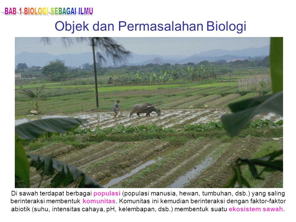 Di sawah terdapat berbagai populasi (populasi manusia, hewan, tumbuhan, dsb.) yang saling berinteraksi membentuk komunitas. Komunitas ini kemudian ber