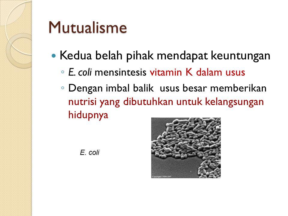 Komensalisme Salah satu diuntungkan dan yang lain tidak berpengaruh terhadap hubungan tipe ini ◦ Banyak mikroorganisme sebagai flora normal seperti pada mata, telinga, dan genitalia eksterna