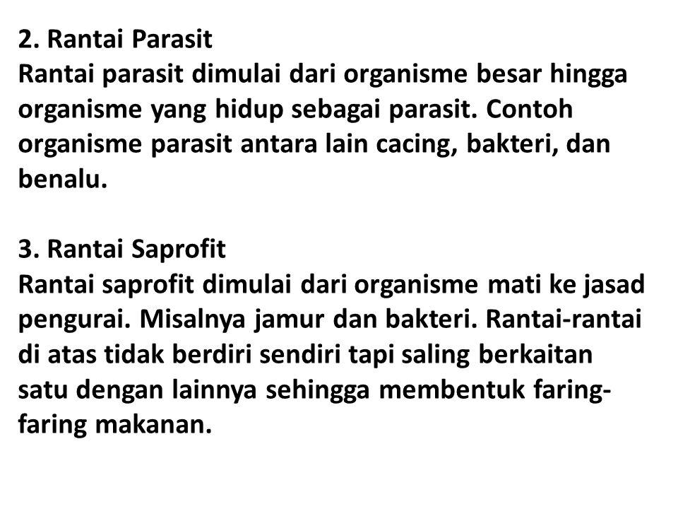 2. Rantai Parasit Rantai parasit dimulai dari organisme besar hingga organisme yang hidup sebagai parasit. Contoh organisme parasit antara lain cacing