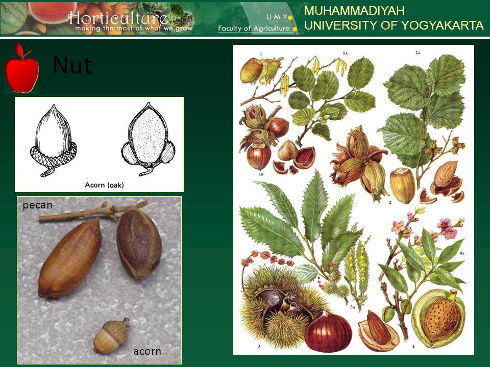 MUHAMMADIYAH UNIVERSITY OF YOGYAKARTA Nut pecan acorn