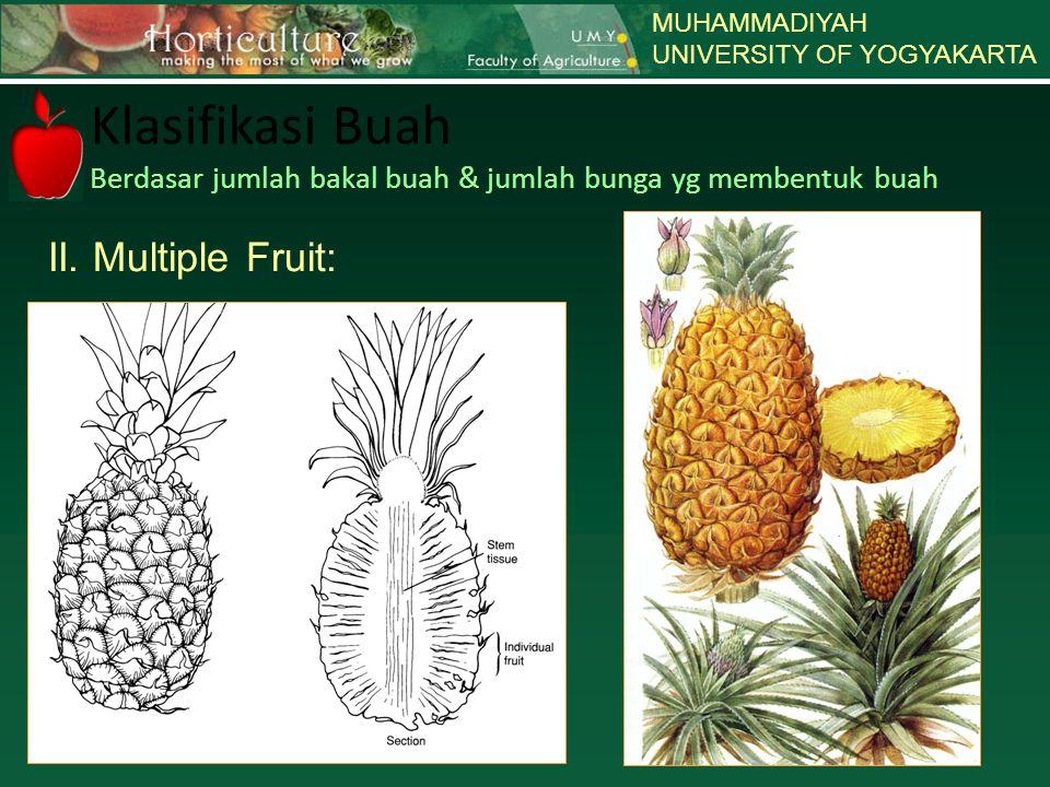 MUHAMMADIYAH UNIVERSITY OF YOGYAKARTA Klasifikasi Buah Berdasar jumlah bakal buah & jumlah bunga yg membentuk buah II. Multiple Fruit: