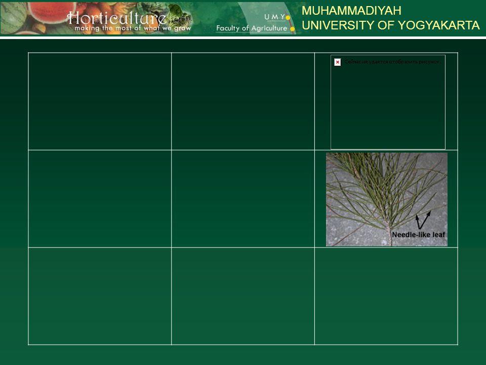MUHAMMADIYAH UNIVERSITY OF YOGYAKARTA