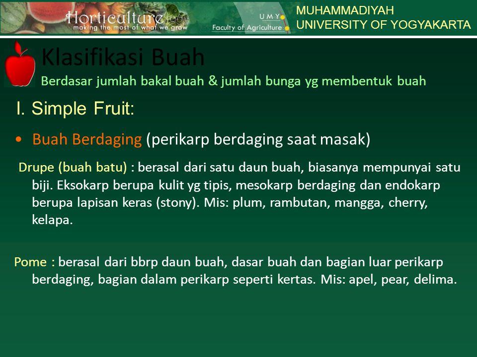 MUHAMMADIYAH UNIVERSITY OF YOGYAKARTA Klasifikasi Buah Berdasar jumlah bakal buah & jumlah bunga yg membentuk buah I. Simple Fruit: Buah Berdaging (pe