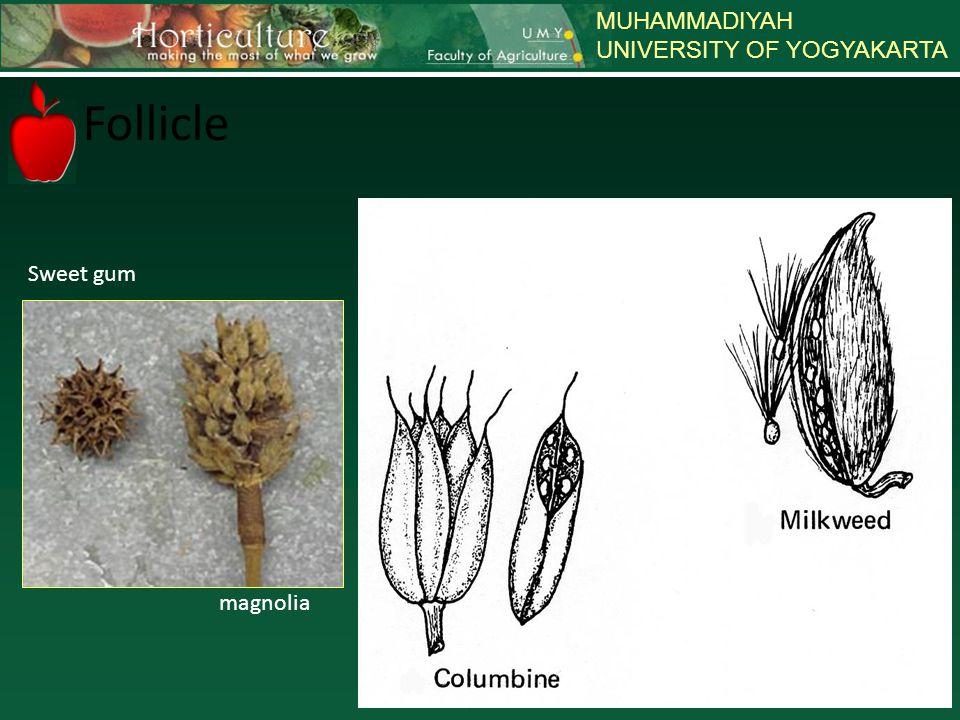 MUHAMMADIYAH UNIVERSITY OF YOGYAKARTA magnolia Sweet gum Follicle