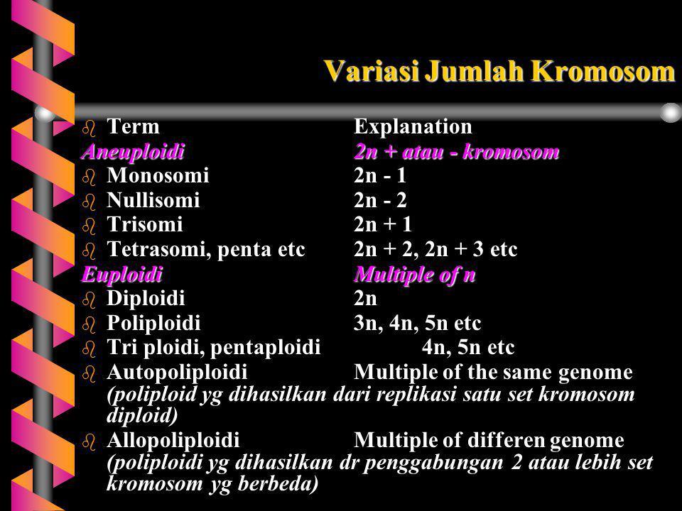 Variasi Jumlah Kromosom b TermExplanation Aneuploidi2n + atau - kromosom b Monosomi2n - 1 b Nullisomi2n - 2 b Trisomi2n + 1 b Tetrasomi, penta etc2n +