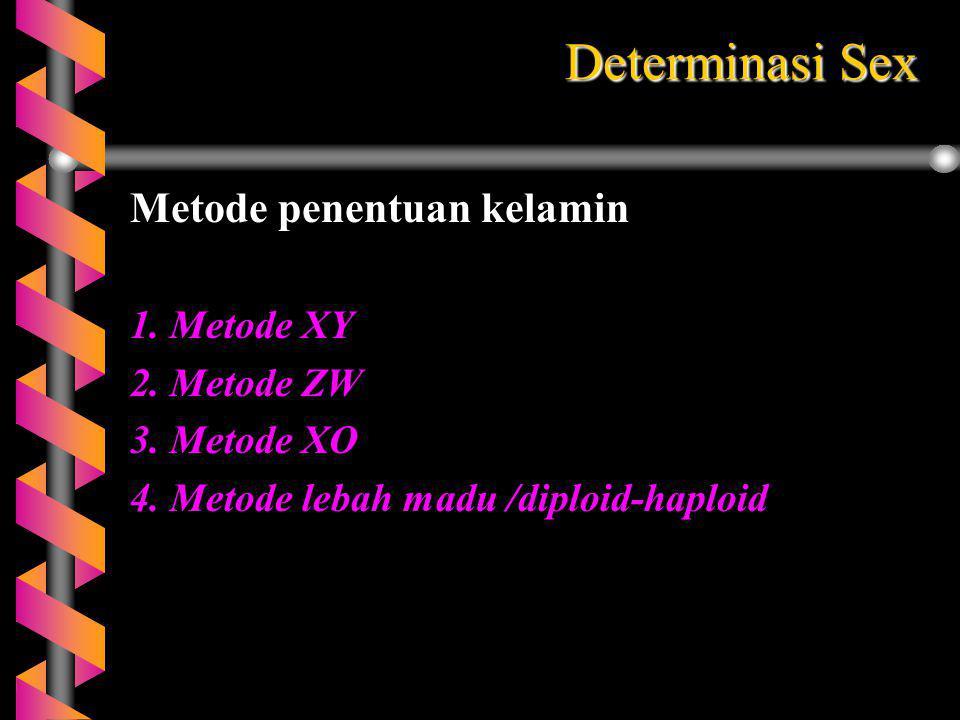 Determinasi Sex Metode penentuan kelamin 1. Metode XY 2. Metode ZW 3. Metode XO 4. Metode lebah madu /diploid-haploid