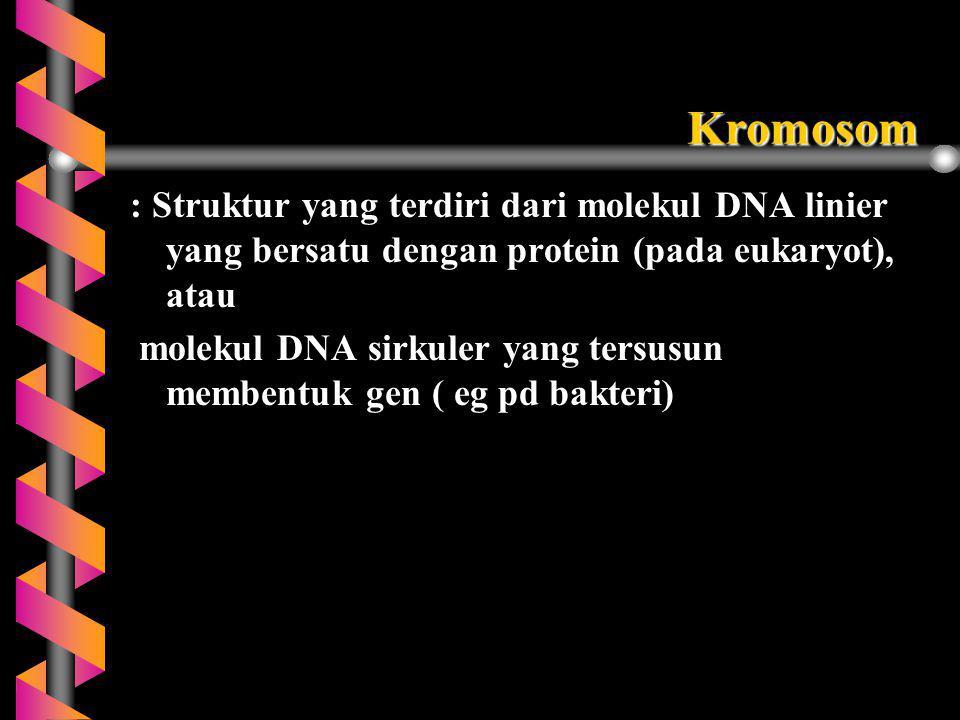 Kromosom : Struktur yang terdiri dari molekul DNA linier yang bersatu dengan protein (pada eukaryot), atau molekul DNA sirkuler yang tersusun membentu