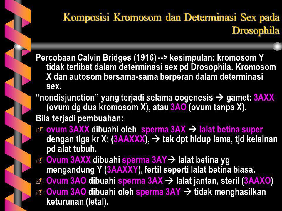 Komposisi Kromosom dan Determinasi Sex pada Drosophila Percobaan Calvin Bridges (1916) --> kesimpulan: kromosom Y tidak terlibat dalam determinasi sex