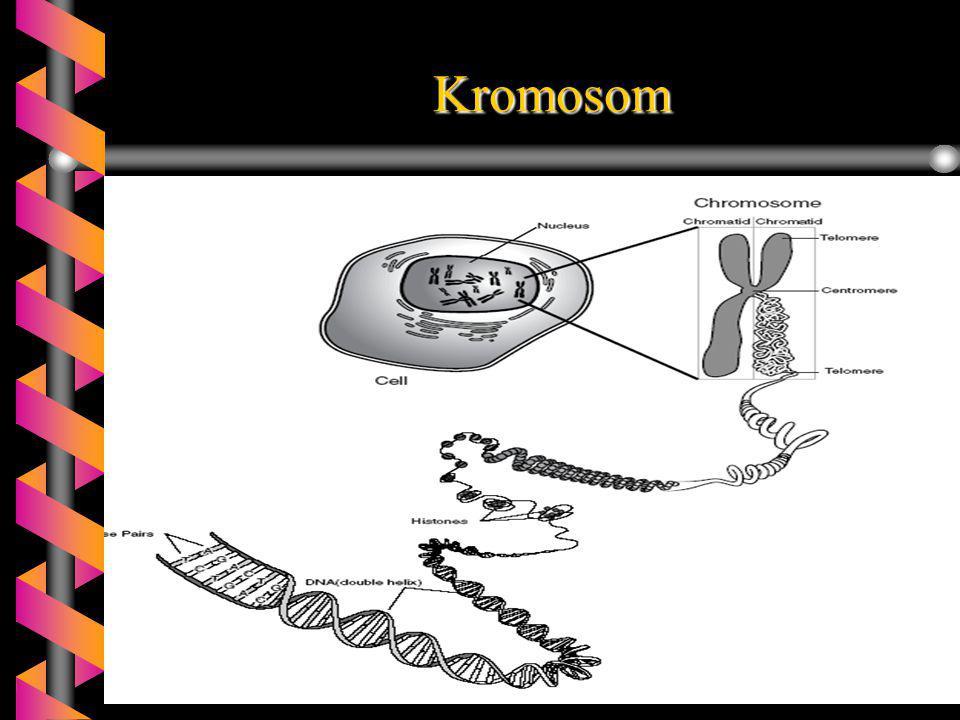 Kelainan kromosom pada manusia 1.Sindroma turner.