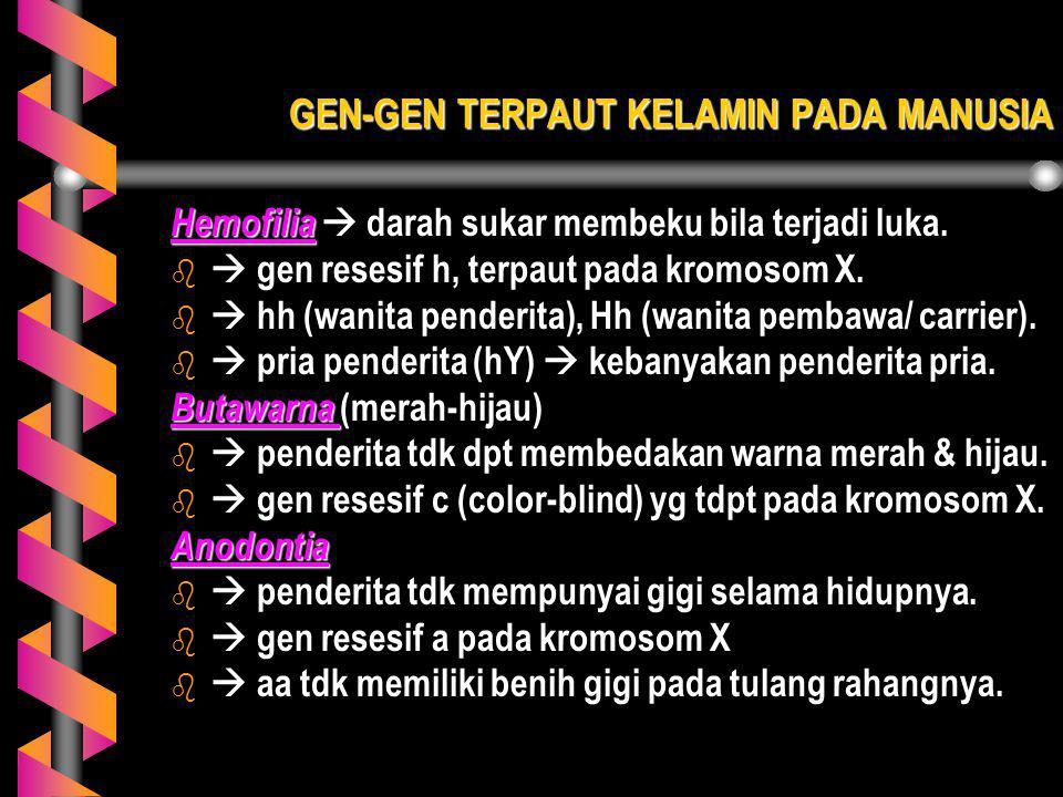 GEN-GEN TERPAUT KELAMIN PADA MANUSIA Hemofilia  darah sukar membeku bila terjadi luka. b  gen resesif h, terpaut pada kromosom X. b  hh (wanita pen