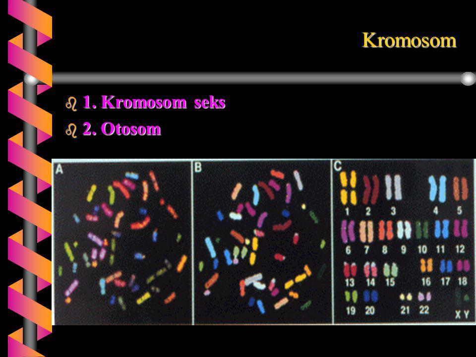 Kromosom b 1. Kromosom seks b 2. Otosom